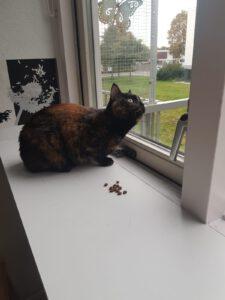 poes-semmy-opvang-karin-nijmegen-kattenherplaatsing
