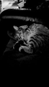 jonge-kater-jantje-nijmegen-kattenherplaatsing (1)