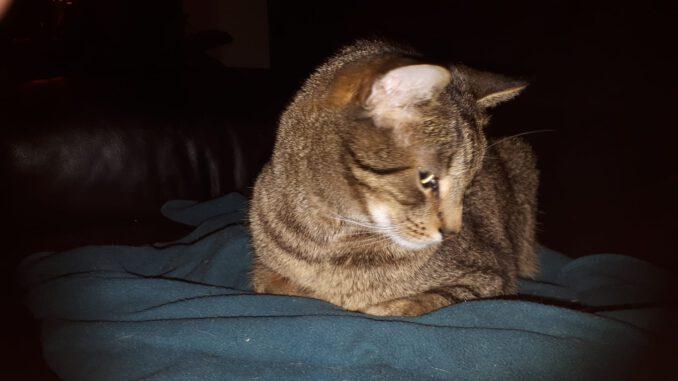 jonge-kater-jantje-nijmegen-kattenherplaatsing