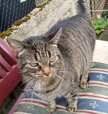 molly-poes-stichting-knarrekat-arnhem-kattenherplaatsing