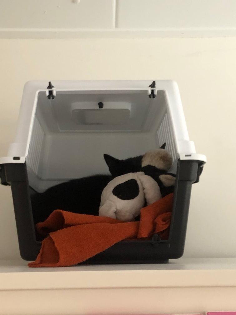 wennen-adoptiekat-herplaatsing-kattenvoorlichting-adoptie-kat (2)