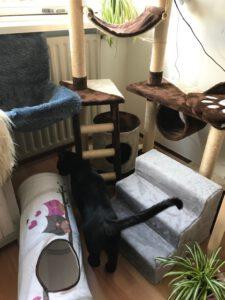 wennen-herplaatsingkat-herplaatsing-kattenvoorlichting-asielkat