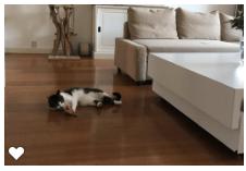 kattenherplaatsing-spot-poes-schiedam (2)