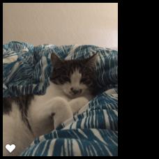 kattenherplaatsing-spot-poes-schiedam (3)