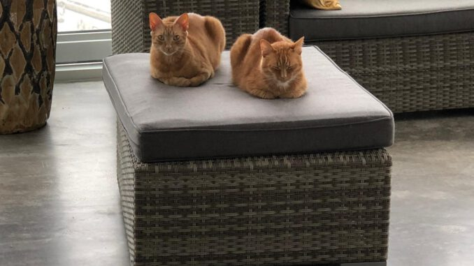 links-mojo-en-tommie-kattenherplaatsing-rotterdam
