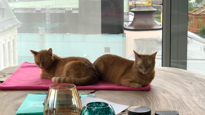links-tommie-en-mojo-rotterdam-kattenherplaatsing