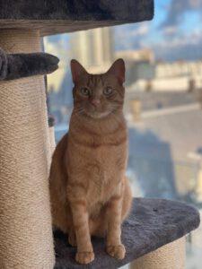 mojo-jonge-kater-kattenherplaatsing-rotterdam