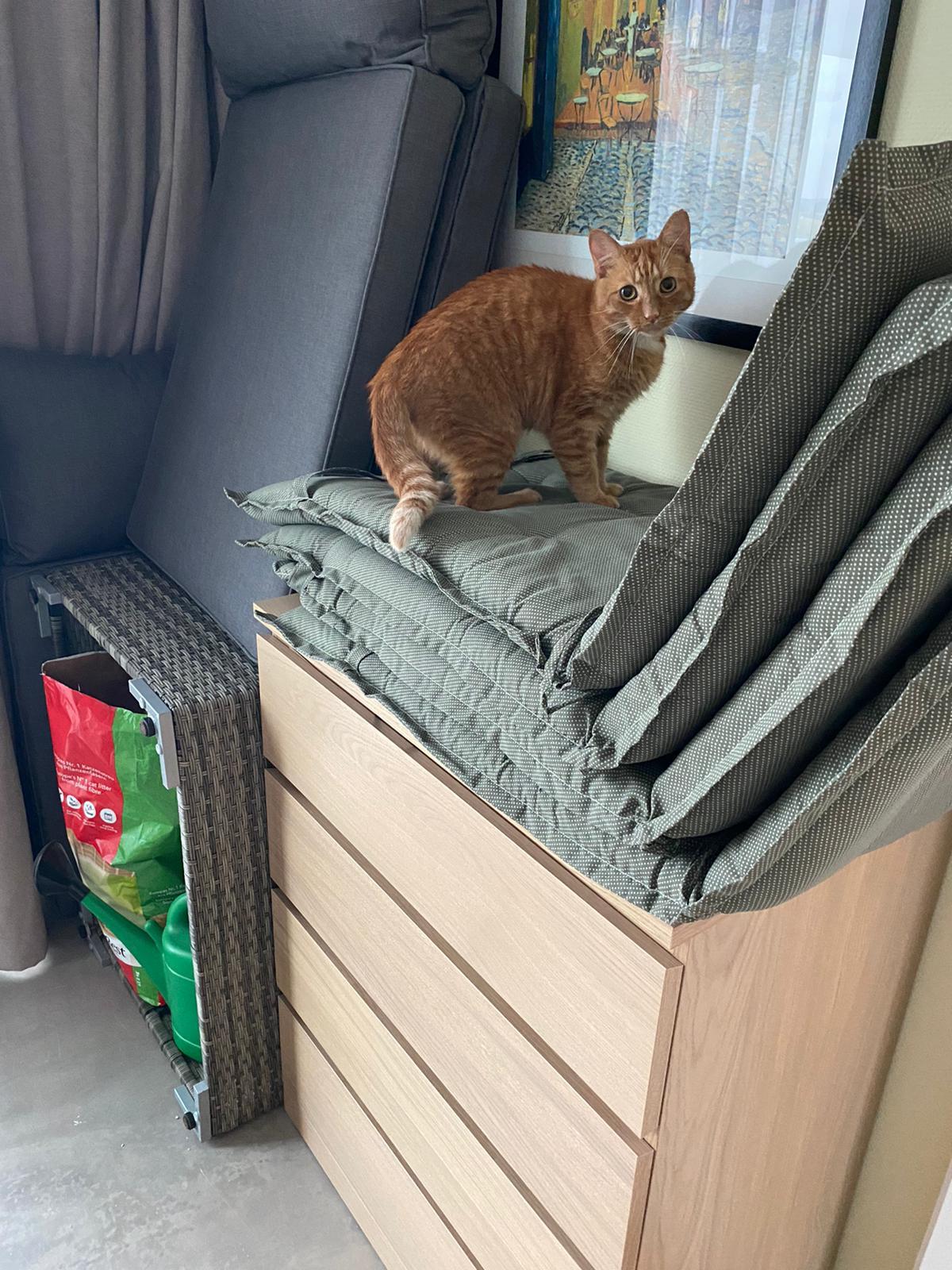 tommie-jonge-rode-kater-kattenherplaatsing-rotterdam (4)