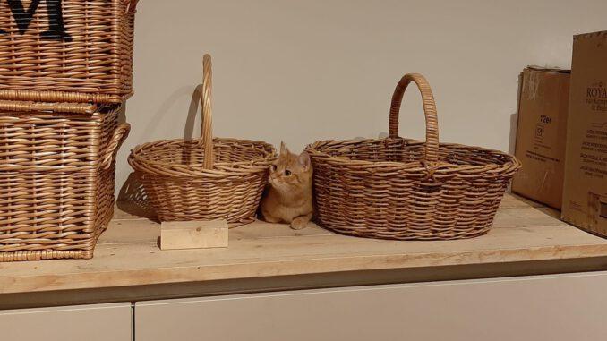 lucifer-jong-kattenherplaatsing-kater