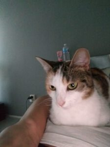 lief-opvang-karin-nijmegen-kattenherplaatsing