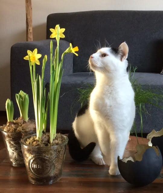 bayley-nieuwe-thuis-kattenherplaatsing