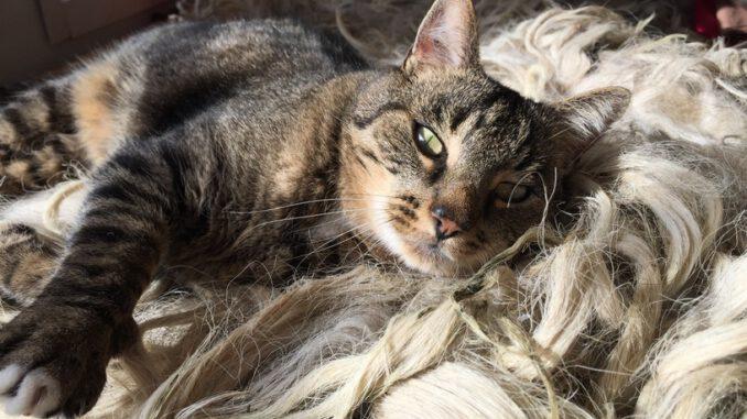 maurits-gorinchem-kattenherplaatsing (2)