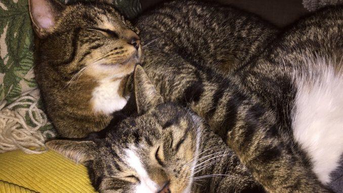 maurits-tibbe-kattenherplaatsing-gorinchem (5)