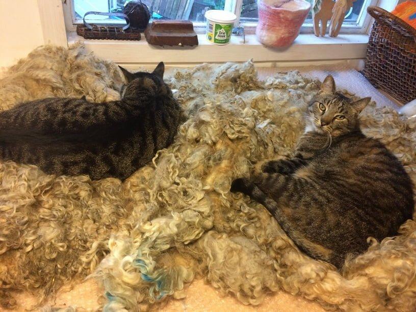 maurits-tibbe-samen-gorinchem-kattenherplaatsing (4)