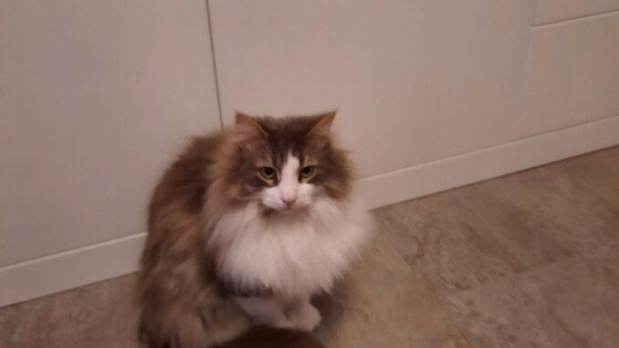 mischa-herkenbosch-siberische-kat