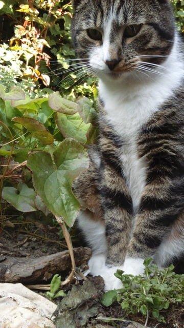 tibbe-kattenherplaatsing-gorinchem (2)