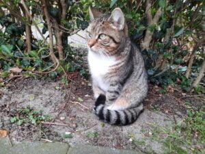 finding-dory-een-nieuw-thuis-gezocht-kattenherplaatsing-nijmegen