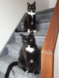 hugo-darwin-kattenherplaatsing-rhoon (1)