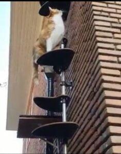 jack-joe-nieuwe-thuis-catout-kattenladder-kattenvoorlichting