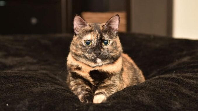 poes-eddy-kattenherplaatsing-barendrecht