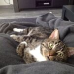 kater-pukkie-wanssum-kattenherplaatsing