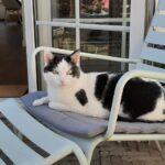 kattenherplaatsing-billy-alphen-aan-den-rijn