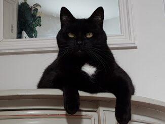 mongo-kattenherplaatsing