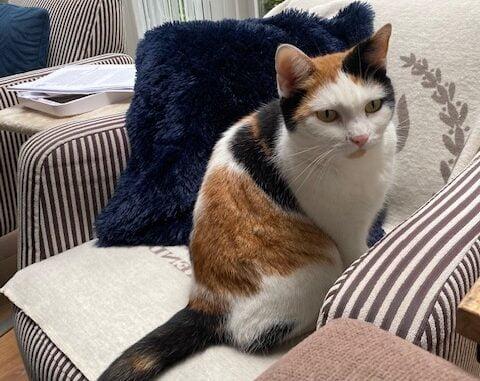 poes-lucky-alphen-aan-den-rijn-kattenherplaatsing (1)