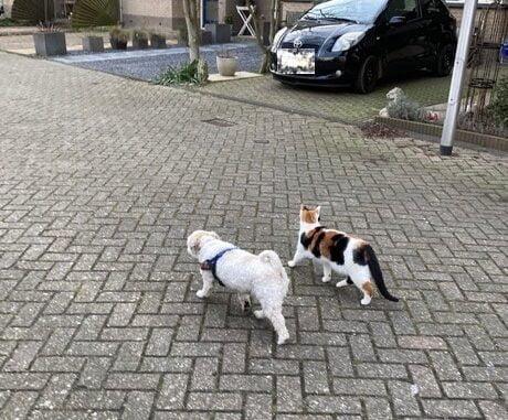 poes-lucky-alphen-aan-den-rijn-kattenherplaatsing