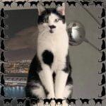 vladimir-opvang-cuijk-kattenherplaatsing
