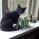 voorpaginafoto-kat-friemel-kattenvoorlichting