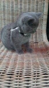 kitten-max-apeldoorn-raskattenherplaatsing