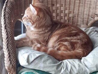 mannus-rhenen-kattenherplaatsing (1)