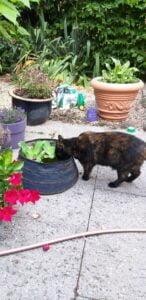 bibi-kattenherplaatsing-rhenen (1)