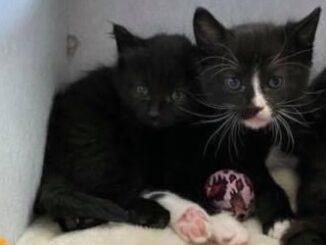 dex-kitt-kittenherplaatsing