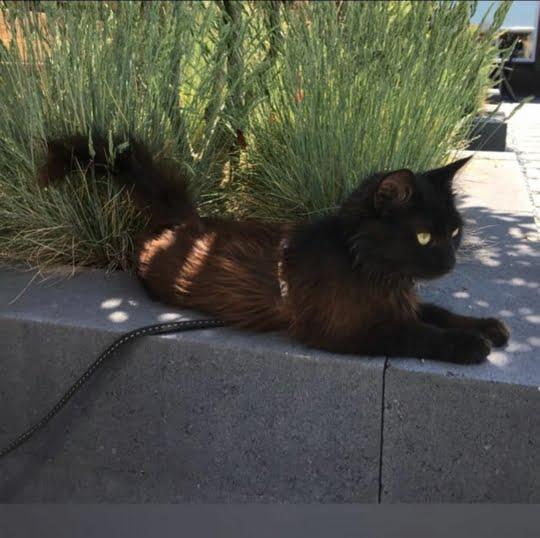eefje-jacquelien-eric-voorpaginafoto-kattenvoorlichting