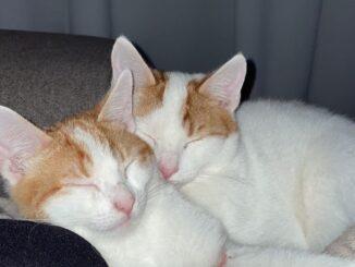 kees-en-co-samen-kattenherplaatsing-terneuzen