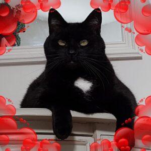 mongo-kattenliefde-kattenherplaatsing-kattenopvang