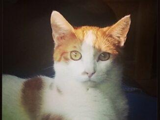 ventje-kater-purmerend-kattenherplaatsing