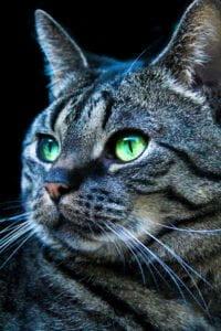 yankee-kattenherplaatsing-best (2)